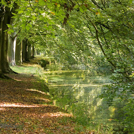 Haagse Bos, Den Haag, Netherlands by Serguei Ouklonski - City,  Street & Park  City Parks ( forest, woodland, bright, flora, scenic, branch, fall, road, the way forward, land, perspective, season, wood, canal, day, park, direction, footpath, no person, plant part, fair weather, reflection, nature, tranquil scene, tree, beauty in nature, leaf, lush, trunk, foliage, environment, sunlight, outdoors, daylight, plant, green color, growth, tranquility, scenics - nature, travel, no people, non-urban scene, landscape, nature landscape )