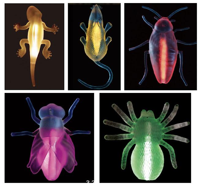 Светящиеся Животные и насекомые