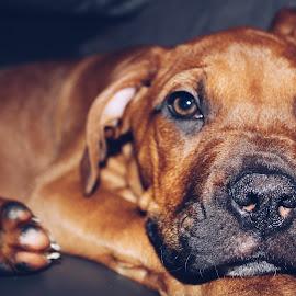 by Adam Graham - Animals - Dogs Puppies