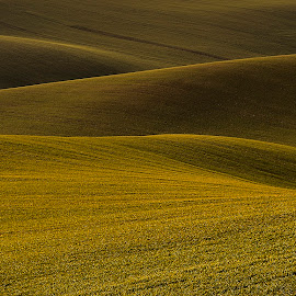 South Moravia by Klaus Müller - Landscapes Prairies, Meadows & Fields ( green, waves, fields )