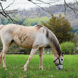 by Donna Schmidt - Animals Horses