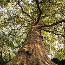 Autumn by Stefania Loriga - Nature Up Close Trees & Bushes