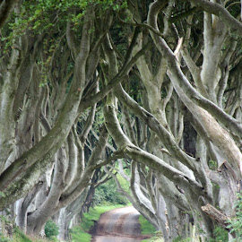 by Reiver Iron - Nature Up Close Trees & Bushes (  )