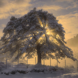 Misty morning by Rune Askeland - Landscapes Forests ( bergen, sunburst, tree, fog, snow, blindheim, norge, norway )
