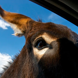 I Window by Robert Remacle - Animals Other Mammals (  )