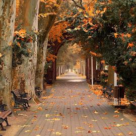 by Diomede Buda - City,  Street & Park  City Parks (  )