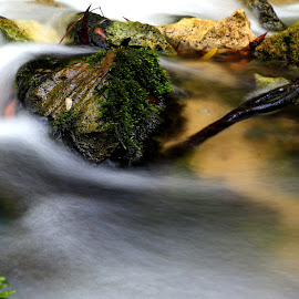 Water in the woods by Gil Reis - Nature Up Close Water ( places, nature, bio, water, forests, life )