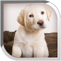 Puppy Live Wallpaper eta icon