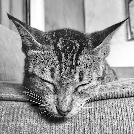 Deep sleep by Danny Rustandi - Animals - Cats Portraits ( iphone 6 plus )