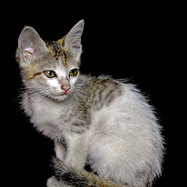 cute by Asif Bora - Animals - Cats Kittens