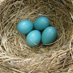 Robin's Eggs.jpg