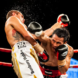 Bang! by Kim Johnson - Sports & Fitness Boxing ( punch, fight, combat, boxing, boxers, bout )