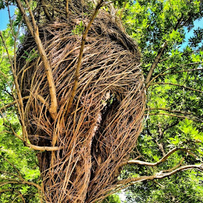 Tree Art by Debi Tipton - Instagram & Mobile Instagram