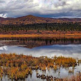 Autumn Silence by Patricia Phillips - Landscapes Travel ( alaska travel eureka autumn )