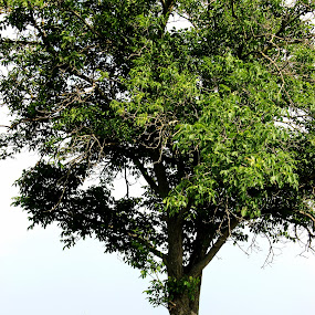 by Sandra Jakovljevic - Digital Art People ( sky, girl, nature, tree, green )