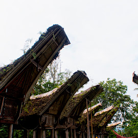 they called alang or barn by Hartono Wijaya  - Buildings & Architecture Homes ( home, toraja, rice, traditional, architecture, house, travel, cultural heritage, barn, indonesia, tradition, travel photography, culture )