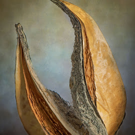 Curves by Jon Kinney - Nature Up Close Other Natural Objects