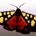 Cream spot tiger moth