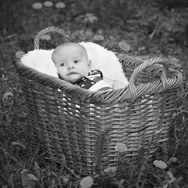 Sweetness On Earth! by Tara Chumsae - Babies & Children Child Portraits ( child, babies, sweet, family, infant, basket, children, adorable, baby, cute, infants, woods )