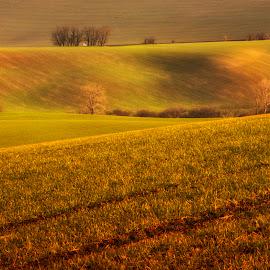 South Moravia by Klaus Müller - Landscapes Prairies, Meadows & Fields ( waves, landscape, fields,  )