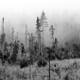 Valdres Woods by Hiking Viking - Nature Up Close Trees & Bushes ( pines, birch, natural light, wood, nature close up, landscape, woods, foggy, tree, cold, nature, fog, landscape photography, trees, weather, nature up close, natural )