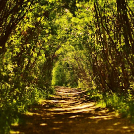 Path To Nature by Sylvia Meier - Nature Up Close Trees & Bushes