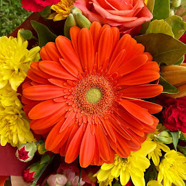 orange gerbera by Donna Racheal - Flowers Flower Arangements ( orange, colourful, flower arrangment, flowers, gerbera )