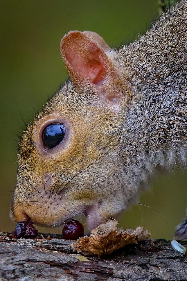 Mr. Squirrel by Mike Craig - Animals Other Mammals