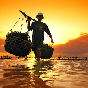 Seawead Farmer by Alit  Apriyana - People Portraits of Men