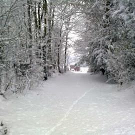 Winter wonderland  by Jolene Hammond - Landscapes Weather