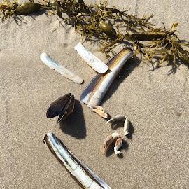 Im Sand by Marianne Fischer - Nature Up Close Sand
