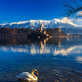 Lake Bled by Miroslav Asanin - Landscapes Waterscapes ( water, reflection, europe, mountain, waterscape, lake, morning, landscape, canon eos, hiking, island, blue sky, blue, slovenia, swan )