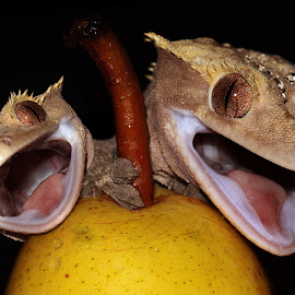 Gremlins by Abbey Gatto - Animals Reptiles