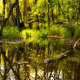 by Ева Йорданова - Landscapes Forests (  )