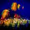 2045 jpg. Firework Jul-4-17-2045.jpg