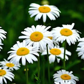 Flowers by Naveen Naidu - Flowers Flowers in the Wild