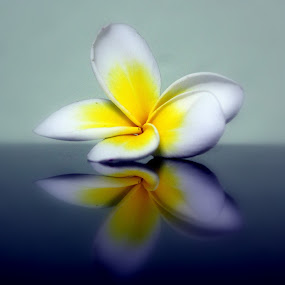 by Kanchan D - Nature Up Close Flowers - 2011-2013