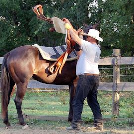 Saddle Up by Philip Molyneux - Animals Horses (  )