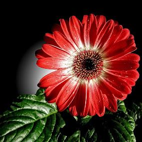 OLI gerber 06 DVD by Michael Moore - Flowers Single Flower (  )
