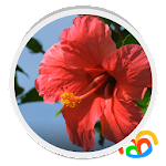 Real Red Flower Live Wallpaper 1.0.b45004 Apk
