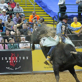 Give Me 8 by Brian  Shoemaker  - Sports & Fitness Rodeo/Bull Riding ( cowboy, rider, bullrider, rodeo, bull, athlete )