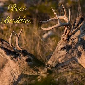 Best Buddies by Sandy Hurwitz - Typography Words
