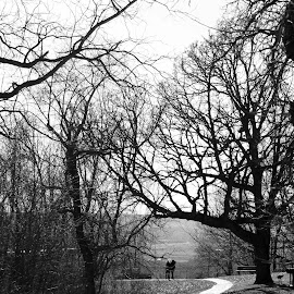 Alma City Park, Minnesota by Jo Brockberg - City,  Street & Park  City Parks ( countryside, park, black and white, landscape, rural, shadows, country, minnesota, trail, trees, day, walk, branches, sidewalk )