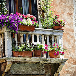 Florence by Jim Antonicello - Buildings & Architecture Architectural Detail ( florence, flowers, italy, balcony )