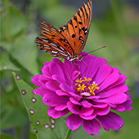 Butterfly delight by Raymond Earl Eckert - Flowers Single Flower ( flower; single; outstanding; color; colorful,  )