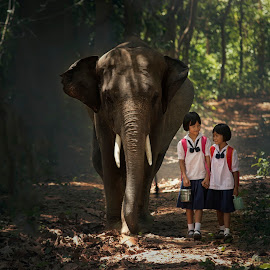 Family of elephants. by Visoot Uthairam - Babies & Children Children Candids ( ride, plant, countryside, herbivore, elephant, tropical, road, travel, leaves, exotic, mai, adventure, easy, nature, seat, fresh, path, asia, friendship, rugged, animal, water, peaceful, breathe, furnishing, species, respire, green, trekking, indian, journey, happiness, leisure, forest, fun, destination, country, holiday, trunk, vacation, jungle, mahout, outdoors, endangered, group, walk, ethnicity, natural )