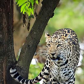by Rakhman Matsunaga Stavolt - Animals Other Mammals