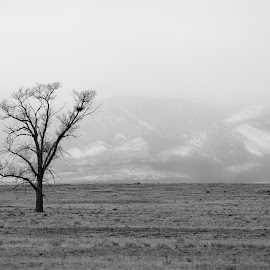 New Mexico Scene by Shawn Thomas - Black & White Landscapes