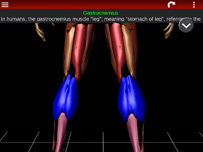 Download Muscular System 3D (anatomy) APK for Laptop