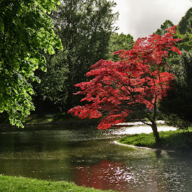 English Garden in Munchen by Oleksii Liebiediev - City,  Street & Park  City Parks ( english garden, munchen, park, germany, city park, red tree )